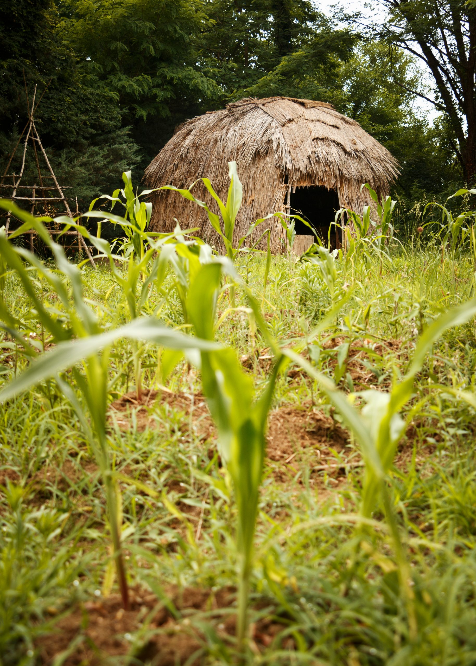 A witchott, or longhouse, clad with locally harvested grasses